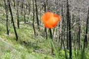 Dê Flores Durante a Vida Porque no Túmulo Elas Chegam Tarde Demais