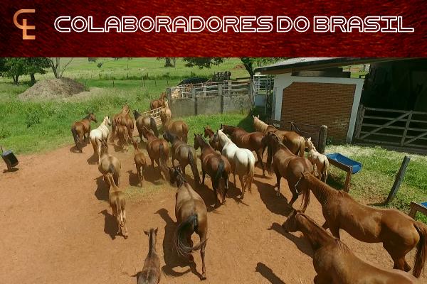 COLAB - Id2